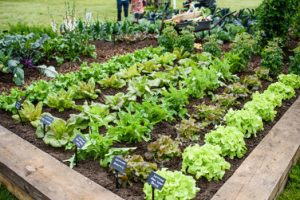 Pic credit BBC GW Spring Fair_Allotment feature by Jon Wheatley and Terry Porter