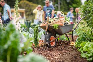 Pic credit BBC GW Spring Fair_Allotment garden by Jon Wheatley and Terry Porter